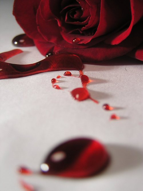 bleeding-rose--large-msg-116705844968