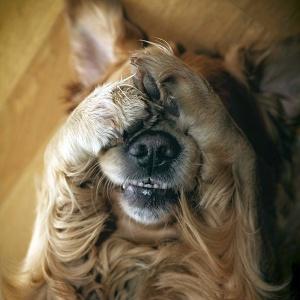 Dog-Afraid-of-Sparklers