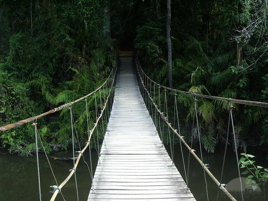 suspension-bridge-into-the-jungle-nakhon-nayok