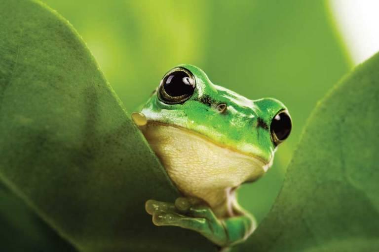 green-biodiversity-frog