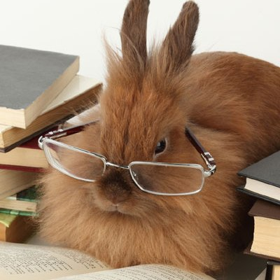 rabbit-glasses